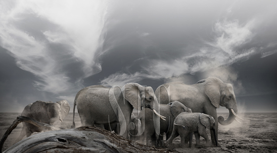 living-landscapes-ghost-elephants